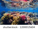 coral reef in egypt with color... | Shutterstock . vector #1200015604