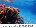coral reef in egypt with color... | Shutterstock . vector #1200015607