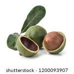 macadamia nuts on white... | Shutterstock . vector #1200093907