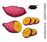 sweet potato hand drawn vector... | Shutterstock .eps vector #1200115684