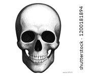 human skull. detailed vector...   Shutterstock .eps vector #1200181894