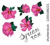 beautiful hibiscus flowers on...   Shutterstock .eps vector #1200188221