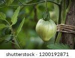 close up of green unripe... | Shutterstock . vector #1200192871