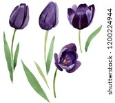 watercolor black tulips flower. ... | Shutterstock . vector #1200224944