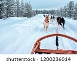 husky dog sled in finland at... | Shutterstock . vector #1200236014
