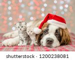 Stock photo st bernard puppy in christmas hat and two kittens together 1200238081