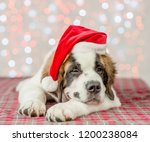 Stock photo happy saint bernard puppy in a christmas hat 1200238084