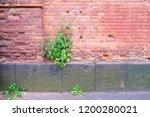 tree on brick wall | Shutterstock . vector #1200280021