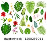 tropical leaf and flowers.... | Shutterstock .eps vector #1200299011