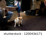 dog  white  puppy  animal  cute ...   Shutterstock . vector #1200436171