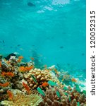 colony of small fishes on the... | Shutterstock . vector #120052315