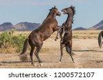 pair of wild horse stallions... | Shutterstock . vector #1200572107