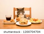 british short hair cat sits at... | Shutterstock . vector #1200704704