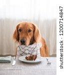 golden retriever ready to eat... | Shutterstock . vector #1200714847