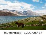 pangong lake in ladakh  north... | Shutterstock . vector #1200726487