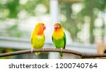 cute and colorful lovebird... | Shutterstock . vector #1200740764