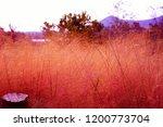 late autumn pink muhly grass... | Shutterstock . vector #1200773704