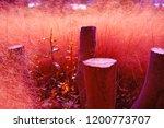 late autumn pink muhly grass... | Shutterstock . vector #1200773707