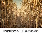 low angle view of a corn maze... | Shutterstock . vector #1200786904