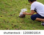 child picking tree nut | Shutterstock . vector #1200801814