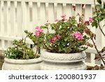 beautiful flowers on the summer ... | Shutterstock . vector #1200801937