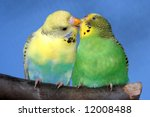 Breeding Pair Of Budgies With...