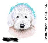 old english sheepdog used to...   Shutterstock . vector #1200878737