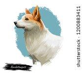 norrbottenspets dog purebred...   Shutterstock . vector #1200883411