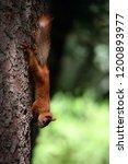 concept of animals in wildlife. ... | Shutterstock . vector #1200893977