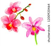 exotic flowers and leaves in... | Shutterstock . vector #1200920464