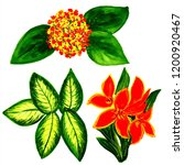 exotic flowers and leaves in... | Shutterstock . vector #1200920467