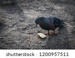 pigeons flew to the place of... | Shutterstock . vector #1200957511