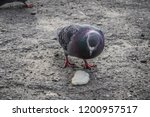 pigeons flew to the place of... | Shutterstock . vector #1200957517