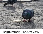 pigeons flew to the place of... | Shutterstock . vector #1200957547
