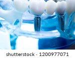 dentist dental teeth teaching...   Shutterstock . vector #1200977071