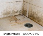 Lichen Stains Occur From Some...