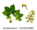 floral cluster and detail of... | Shutterstock . vector #1201052881
