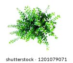 green house plant isolated on... | Shutterstock . vector #1201079071