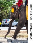 Small photo of A domesticated elephant with yellow and orange caparison walking a street in Thailand rided by tourists and mahout