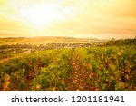 sunny vineyards above small... | Shutterstock . vector #1201181941