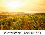 sunny vineyards above small... | Shutterstock . vector #1201181941