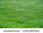 urban photography  a lawn is an ... | Shutterstock . vector #1201285261