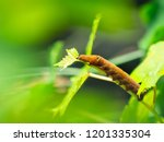 the brown caterpillar were... | Shutterstock . vector #1201335304