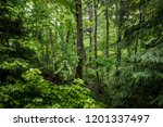 Lush Green Mixed Forest View