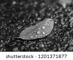 isolated leaf with water... | Shutterstock . vector #1201371877