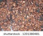 fried acorns on a baking sheet | Shutterstock . vector #1201380481