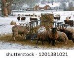 Farming   Livestock Feeding In...