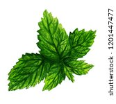 fresh mint leaves painted with... | Shutterstock . vector #1201447477