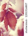 autumn brown oak leaves  in the ... | Shutterstock . vector #1201516807