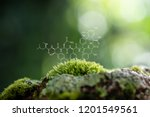plants background with... | Shutterstock . vector #1201549561